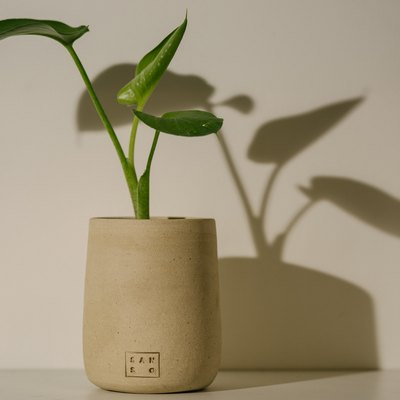 Top 5 Plants to Give as Housewarming Gifts (Because They're Pretty Hard to Kill)