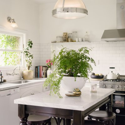 Houseplant on kitchen island