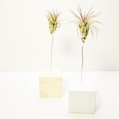 Display Your Air Plants With This Cute DIY