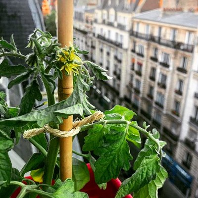 Want to Grow a Balcony Garden? Start With These Easy Summer Vegetables