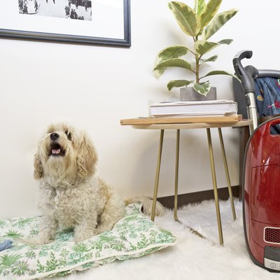 cleaning after your pet