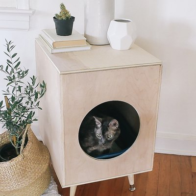 Cat inside plywood litter box