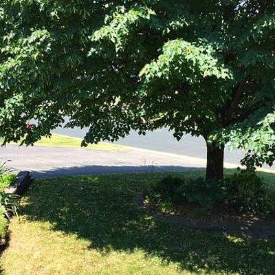 Tree on lawn.