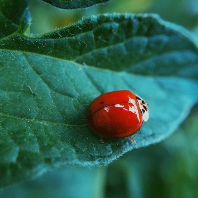 8 Beneficial Insects Every Vegetable Garden Needs