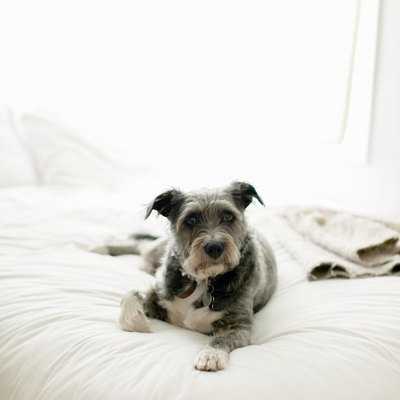 Easy Solutions for Removing Pet Hair From Furniture Using Common Household Items