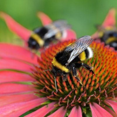 Bee-Friendly Plants and Landscaping