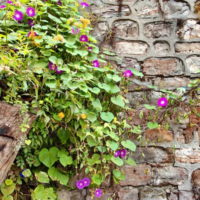 Stone Wall with Plants and Flowers