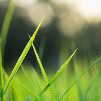 How (and When) to Fertilize Your Lawn