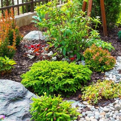 Landscaping in home garden