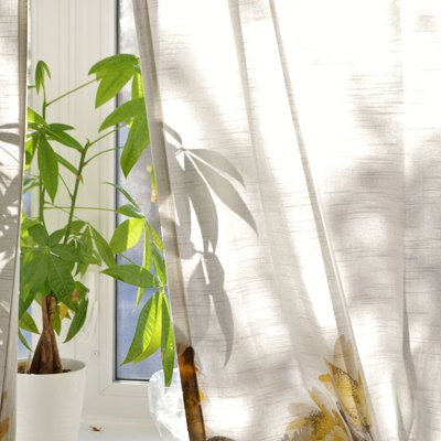 Money Tree Plant on Window Sill