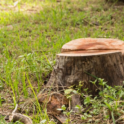 How To Kill And Remove A Tree Stump