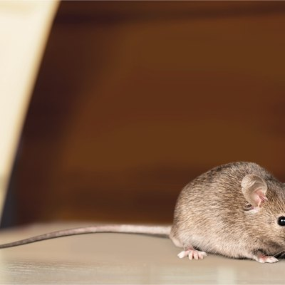 How to Build a Humane Mouse Trap With a Coke Bottle