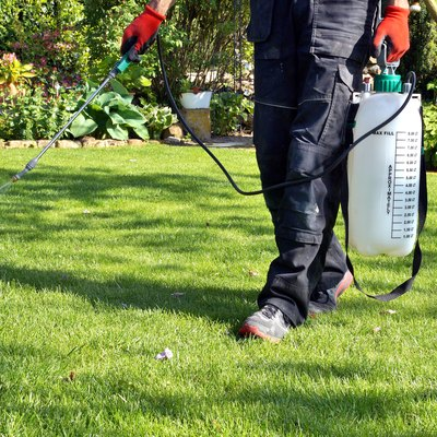 weedicide spray on the weeds in the garden. spraying pesticide with portable sprayer to eradicate garden weeds in the lawn. Pesticide use is hazardous to health.