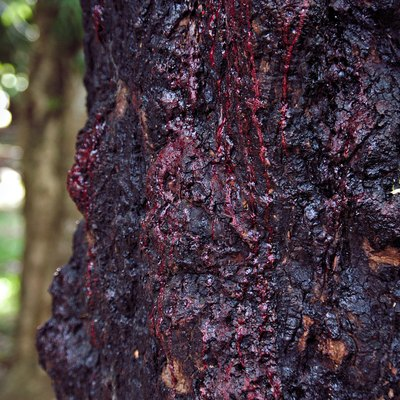 What Is a Bleeding Tree?