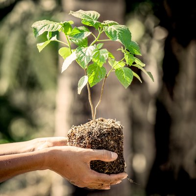 How to Uproot a Tree Without Killing It