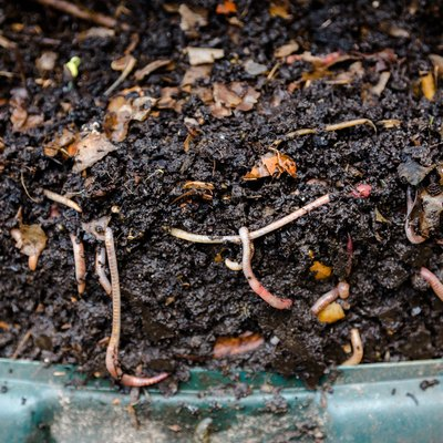 Worm Composting: How to Get Started