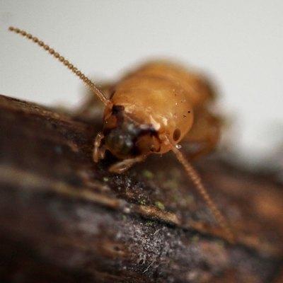 Termite Greetings
