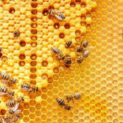 About Beehives