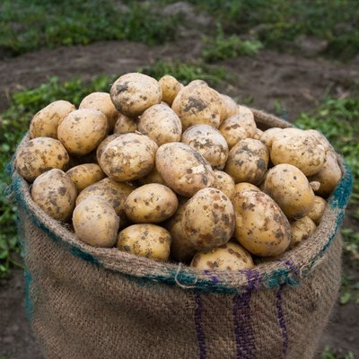The Difference Between Tubers & Root Crops