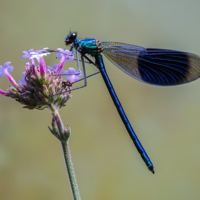 The List of Useful Insects