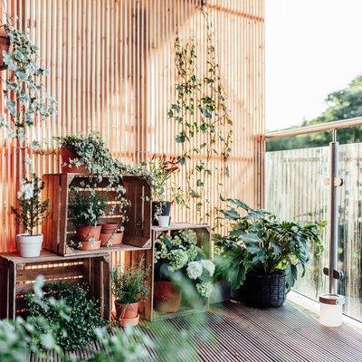 Outdoor plants in balcony
