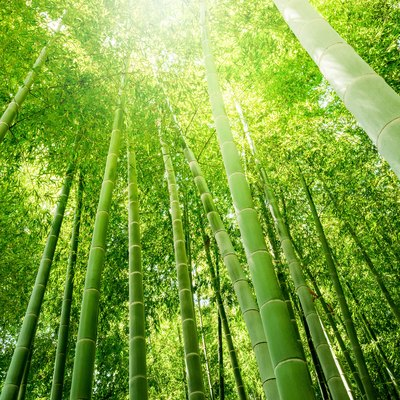 What You Should Know About Bamboo Flooring