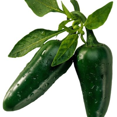 How Long Does a Jalapeno Plant Grow?