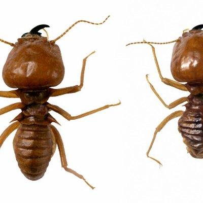 How to Treat Wood for Termites