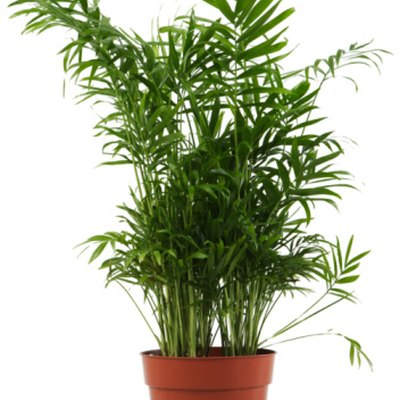 The Best Fertilizer for Bamboo