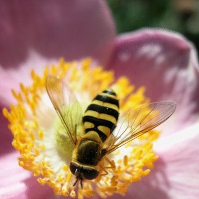 What Are Bumble Bees Attracted To?