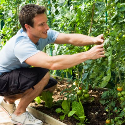 Can I Plant Tomatoes With Beets?