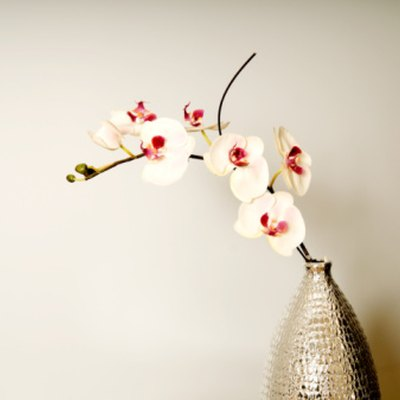 How to Trim Back Orchids After Blooming