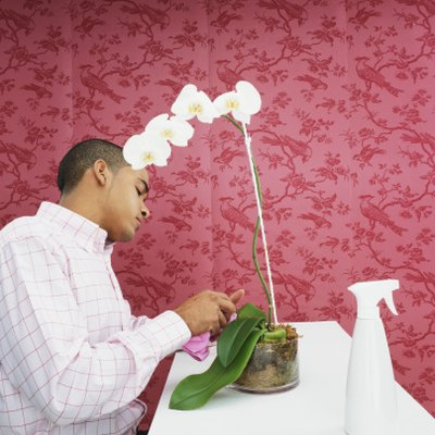 What Do You Do When Your Orchid Loses All Its Flowers?