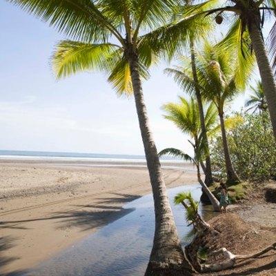 Palm Tree Adaptations