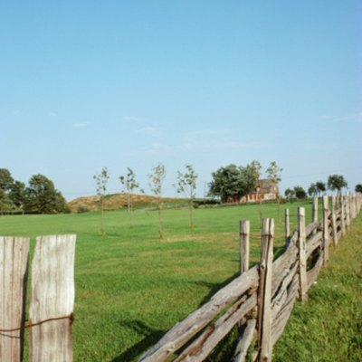 Comparison of Fir & Cedar Wood for a Wood Fence