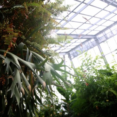 How to Make a Greenhouse Whitewash