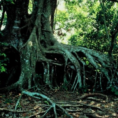 Disadvantages & Advantages of Mangroves