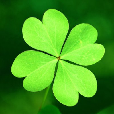 Will Lime Get Rid of Clover in Lawns?
