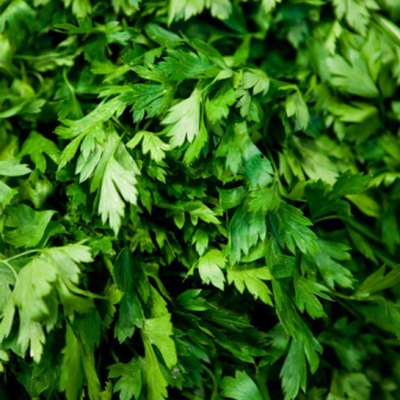How to Grow Cilantro Hydroponically