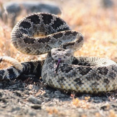 The Essential Oils That Repel Snakes