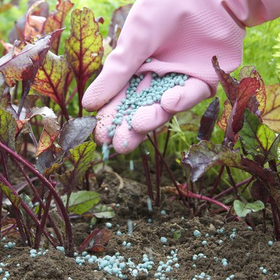 Describe the Process of Pollination & Fertilization in Flowering Plants