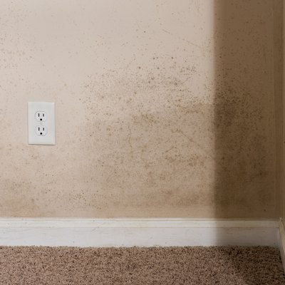 What Is Mold-Resistant Drywall?