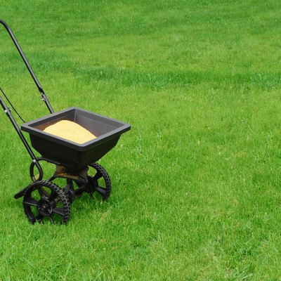 Lawn seed spreader in middle of bright green lawn
