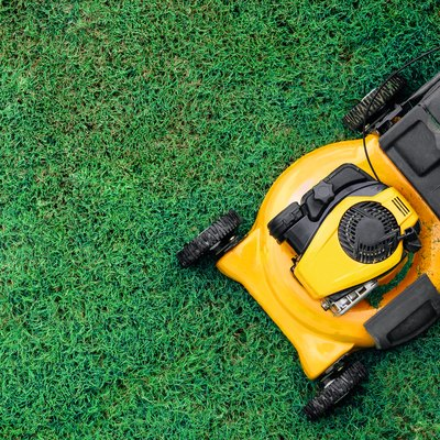 Yellow lawn mowers cut green grass.