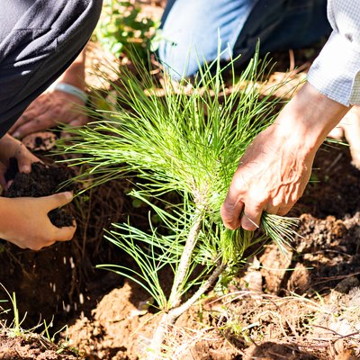 Hands of two men and a boy placing soil to plant a tree in the ground in the middle of the forest on a sunny day