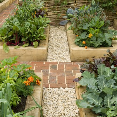 Raised beds in potager garden