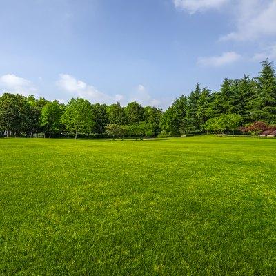 Green grassland and blue sky