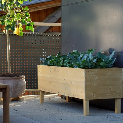 view of a wooden raised bed with growing vegetables on a balcony / terrace