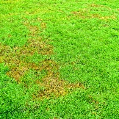 Nature, Green lawns, lawns, Background, surface, Rotten, pathogen