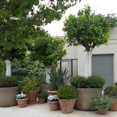Potted plants in front of the building